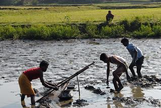 Men fishing, Bangladesh. Photo by WorldFish, 2007