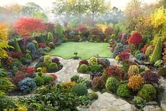 Autumn Japanese maple colours are increasing in the upper garden (October 28) (Four Seasons Garden) Tags: autumn colour fall garden foliage tapestry fourseasonsgarden