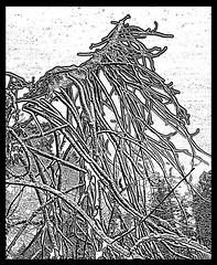 tree print1 (ramonarifkin) Tags: blackandwhite tree print campbellriver snowybranches linoeffect
