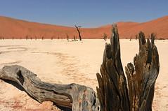 dead vlei (hirngespinste) Tags: red tree sand desert dunes namibia namib nikoncoolpixs9100