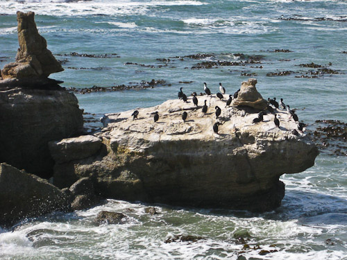Stewart Island and Spotted Shags