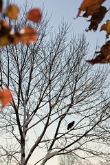 them crooked vultures. (stevenbley) Tags: abandoned urbanexploration urbanexploring urbex decay newjersey nj rust guerillahistorian sneak breeze grime decayed bokeh peelingpaint hospital snow exploring urban asylum psychiatric asbestos chestdisease psychiatrichospital