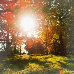 hard sun (lucymagoo_images) Tags: park autumn trees red sun philadelphia mobile square shadows bright samsung spots philly rays fairmount android magichour magichourapp lucymagoo lucymagooimages