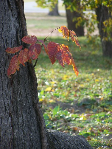 Autumn 2011 by Musings By Char