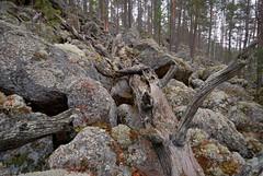 Jppiln Kivikuru Pieksmki 34 (Timo Heinonen) Tags: nature iceage finland rockycanyon easternfinland