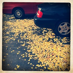 (Joie de Vivre) Tags: autumn two car wheel yellow circle leaf ginkgo many iphone hipstamatic