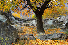 Rainbow (Amir Mukhtar Mughal | www.amirmukhtar.com) Tags: autumn pakistan tree fall colors leaves yellow canon photography rainbow rocks colours autumncolours autumncolors amir hunza fallenleaves mughal mughals pakistanphotos pakistanimages minapin amirmukhtar wwwamirmukhtarcom amirphotog000708minapin