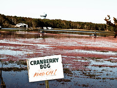 Keep Off! (goodbyetrouble) Tags: new england fall cranberry cranberries cape cod bog hyannis cranberrybog