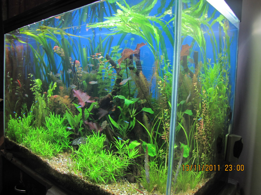 Fish aquarium in vile parle timing - Guidance And Critique Most Welcome As Always Smile