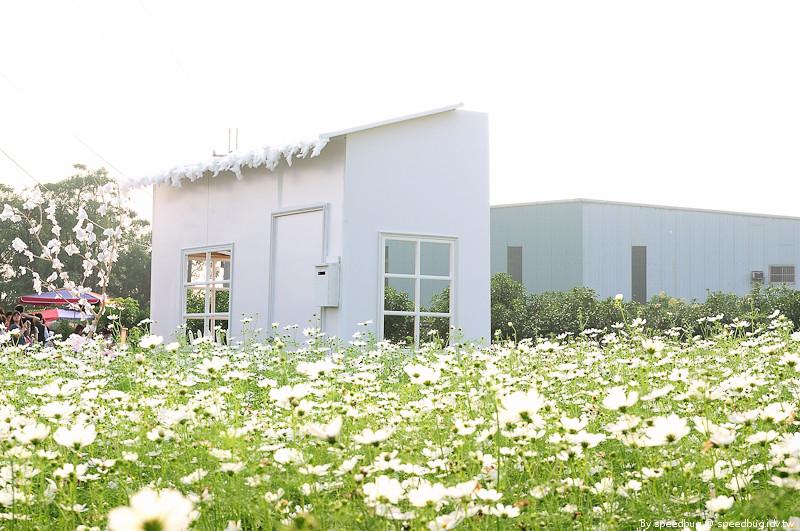 橋頭花海 (49)