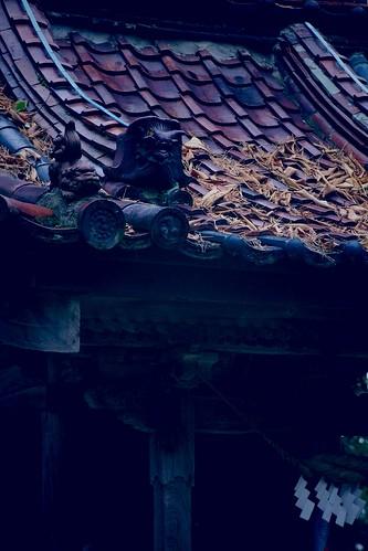 屋根の枯葉