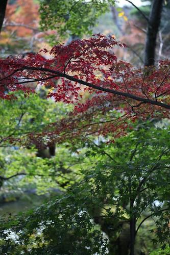 秋 / Autumn