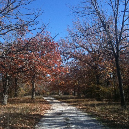 Driveway on Apple Tree Farm