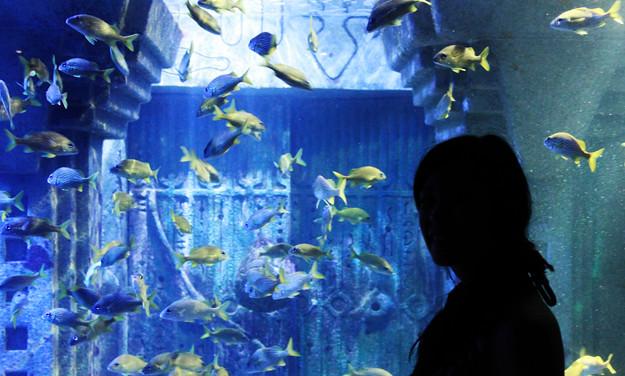 atlantis aquarium-2
