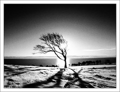 Sun, Snow and Tree (ccgd) Tags: snow tree scotland highlands grain cromarty processed sutor