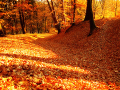 Autumn Leaves (Paula ) Tags: autumn trees fall forest woods path autumnleaves autumncolors romania baiamare maramures outstandingromanianphotographers