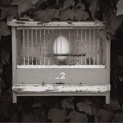 Futureless (Steef V) Tags: birdcage netherlands poetry egg visual steef ei veldhoen poezie vogelkooi