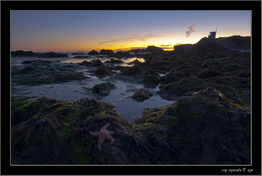 Starfish In Leo Carillo State Beach