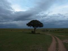 Masai Mara landscape (Carlos Affonso) Tags: africa kenya safari masai maasai savanna masaimara maasaimara savana quênia