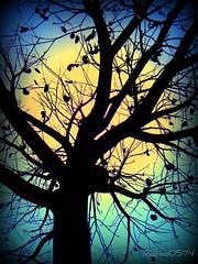 Tree of Live (rocco0574) Tags: sky tree contraluz arbol shadows cielo somras flickraward