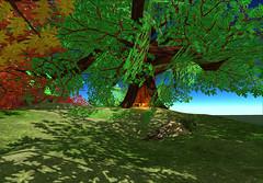 Giant Oak Tree - 21strom