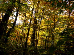church (dmixo6) Tags: autumn trees colour nature beauty leaves maple muskoka dugg dmixo6