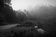 _MG_0758_sRGB (stalin.sm) Tags: mist kerala wayanad mistymorning vythri padinjarathara