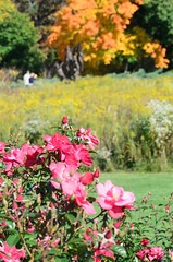 Rose and Prairie Gardens Photo