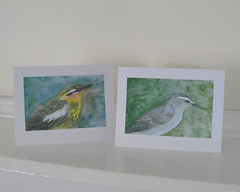 Warbler and vireo cards (mbrichmond) Tags: bluejay chickadee kingfisher owl flicker vireo yellowbirds birdprints assortedbirds maryrichmonddesign birdcards naturecards songbirdcards frommywatercolors
