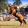 El reservao (Eduardo Amorim) Tags: horses horse southamerica caballo uruguay cheval caballos cavalos prado montevideo pferde cavalli cavallo cavalo gauchos pferd hest hevonen chevaux gaucho 馬 américadosul montevidéu häst uruguai gaúcho 말 amériquedusud лошадь gaúchos 马 sudamérica suramérica américadelsur סוס südamerika jineteada حصان άλογο americadelsud gineteada ม้า americameridionale semanacriolla semanacriolladelprado eduardoamorim semanacriolladelprado2011 ঘোড়া