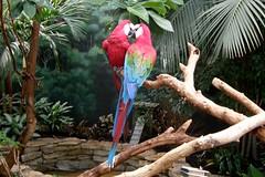 Brookfield Zoo (Tiger_Jack) Tags: bird birds parrot parrots brookfield animals brookfieldzoo zoo zoos itsazoooutthere zoosofnorthamerica