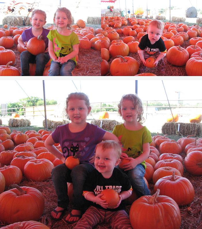 pumpkin SB1