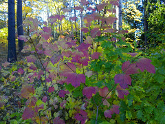 colours in falltime (Per Ola Wiberg ~ Powi) Tags: autumn oktober nature beautiful sweden picturesque breathtaking musictomyeyes potofgold falltime ineffable naturegroup 2011 dreamgarden goldheart intouchwithnature eker wrangels tappstrm naturesgallery photopassion hstlv bforbeauty citrit eperke exemplaryshotsflickrsbest dreamplaces natureslove naturestyle photographersgonewild naturestreasures butterflyawards naturegreenstar naturescreations absolutelyperrrfect addictedtophotograph naturesribbon poppyawards esenciadelanaturaleza allthebeautiesofnature earthofnature excellentgallery thebestnatureshot