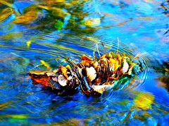 Water Art: Trapped autumn leaves (peggyhr) Tags: blue friends orange brown white canada black green water yellow reflections river bc sunny autumnleaves clear ripples cariboo hmb wow1 finegold thegalaxy mondayblues 25faves peggyhr flickrbronzeaward heartawards shiningstar raccontiamo vanagrammofontheoldgramophone 100commentgroup artofimages mygearandme poppyawards ringexcellence nossasvidasnossomundoourlifeourworld blinkagainforinterestingimages redgroupno1 photographismemory flickrstruereflection1 youthinkthisisart flickrstruereflections sovereigncreek p1060441bpp