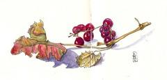 11-09-11c by Anita Davies