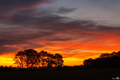Colorful Sunrise (BraCom (Bram)) Tags: trees netherlands clouds sunrise fire bomen colorful nederland silhouettes wolken noordbrabant vuur wintelre zonsopkomst silhouetten kleurrijke bracom mygearandme mygearandmepremium mygearandmebronze mygearandmesilver mygearandmegold mygearandmeplatinum mygearandmediamond
