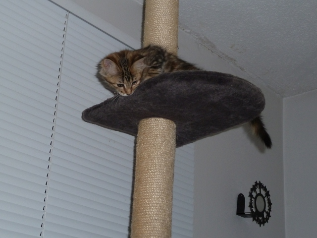 Up the Cat Tree