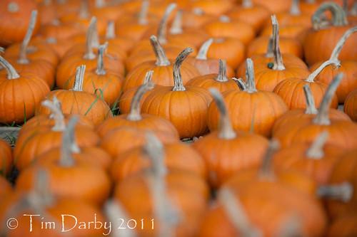 2011-10-19 - Pumpkin Patch-354