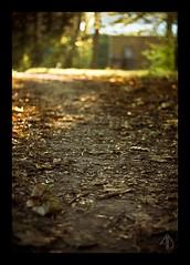 Automne (Adam Deleu) Tags: road park grass automne route dirt terre