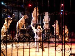 Get Up, Stand Up (leroyo) Tags: lumix raw voigtlander panasonic tigers cirque nokton 25mm f095 royan 2011 gf1 rpp pisteauxétoiles