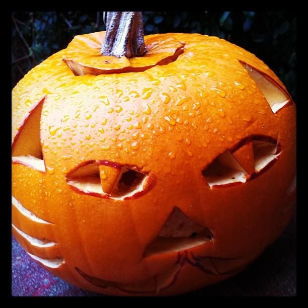 Rain pumpkin