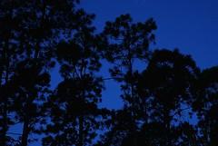 Raining Stars on the Pines (Zoom Lens) Tags: trees tree pine night forest dark stars star darkness pines nightsky pinetrees starlight starlightstarbright johnrussellakazoomlens copyrightbyjohnrussellallrightsreserved