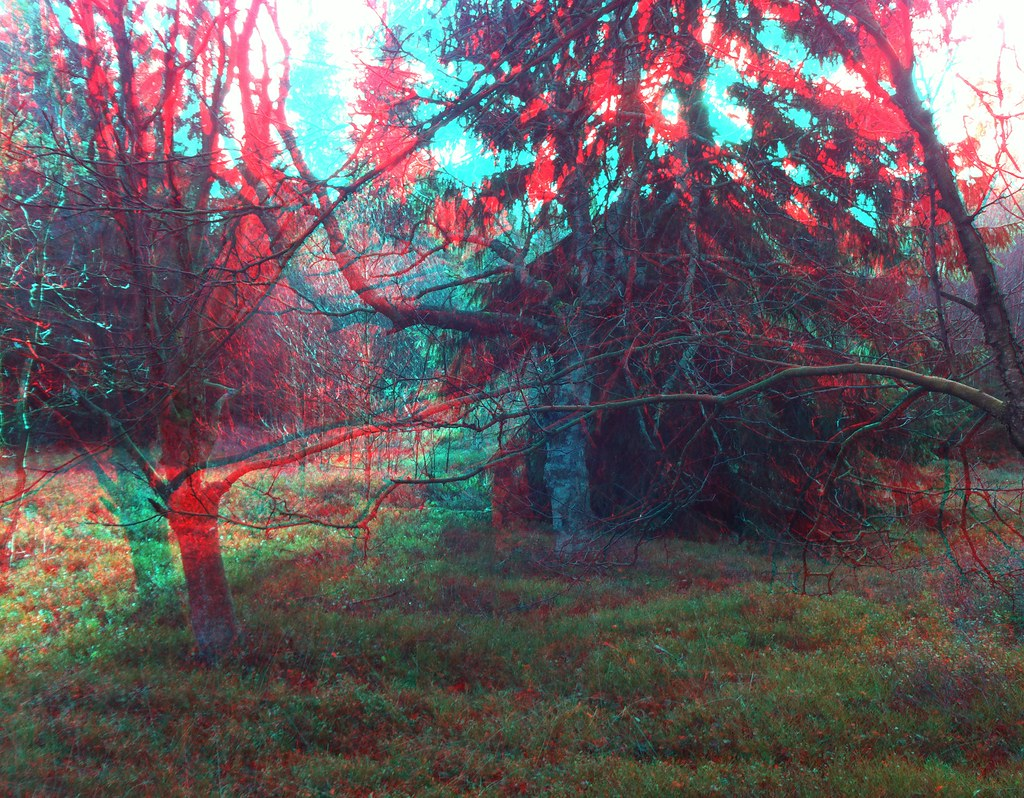 3D Anaglyph Pictures 6312838557_98343e5d38_b