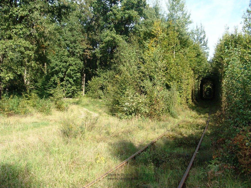El túnel de los árboles (Linda! naturaleza)