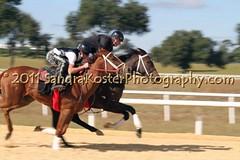 IMG_5645 (SantaFeSandy) Tags: horses babies florida jockey fl breeze equestrian equine thoroughbreds gallop riders morriston racehorses 2yearolds exerciseriders dennismanning oakridgetrainingcenter roberteversole eversolethoroughbreds