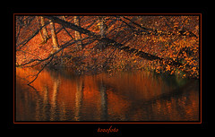 (tozofoto) Tags: autumn trees shadow lake reflection nature water colors canon landscape hungary natur zala loght alberoefoglia tozofoto saariysqualitypictures