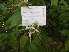 19 (marianauchoa2011) Tags: flres