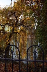 Impressionnist autumn along the river Seine (Sokleine) Tags: autumn light paris france tree fall leaves seine automne river gate iron lumire ironwork 92 hautsdeseine neuillysurseine impressionnism iledelajatte