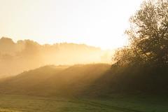 Morning V (180Pixel) Tags: morning fog 35mm badoeynhausen eos400d