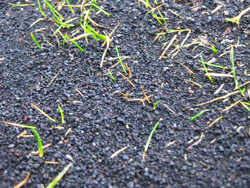 Ash-Covered Grass